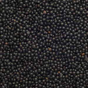 Close up of Lentils Beluga Black Organic