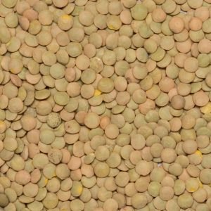 Close up of Lentils Green Laird Organic